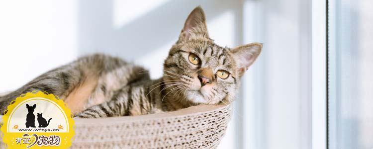 猫便秘的五个原因 猫便秘也分为三种情况