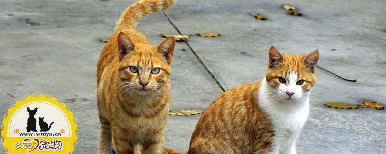 猫咪便秘的症状 猫咪便秘有哪些症状