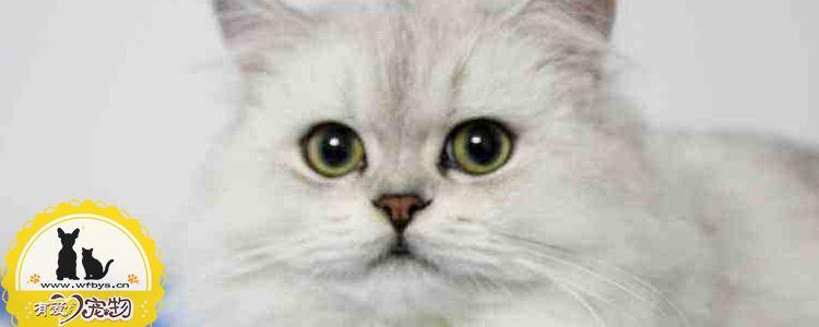 猫子宫蓄脓怎么办 该如何治疗