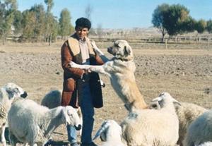 安纳托利亚牧羊犬便秘怎么办 便秘治疗方法介绍