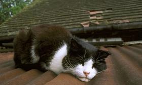 威尔斯猫副伤寒怎么治疗 副伤寒防治方法