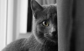 科拉特猫打喷嚏吃什么药 科拉特猫打喷嚏解决办法
