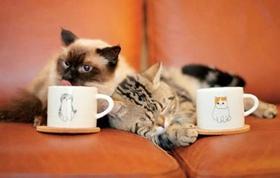 巴厘猫肠炎吃什么药 巴厘猫肠炎用药介绍