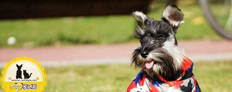 狗传染病都有哪些 让人闻风丧胆的传染病(细小)