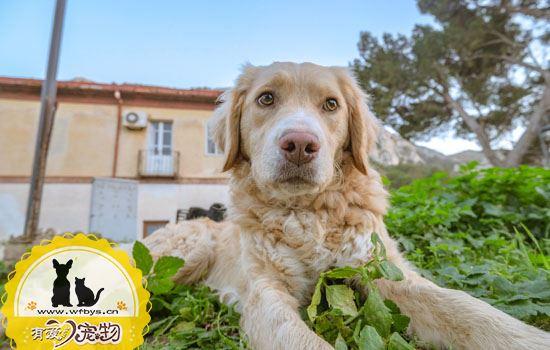 狗狗皮肤瘙痒的原因 狗狗常见的皮肤瘙痒的问题