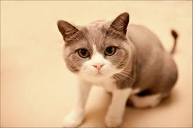 猫钱癣如何治疗 猫钱癣治疗方法