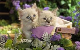 褴褛猫咳嗽如何治疗 褴褛猫咳嗽治疗建议