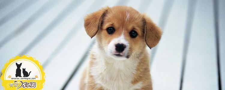 狗狗寄生虫感染的症状 知道狗狗感染寄生虫会怎么样吗