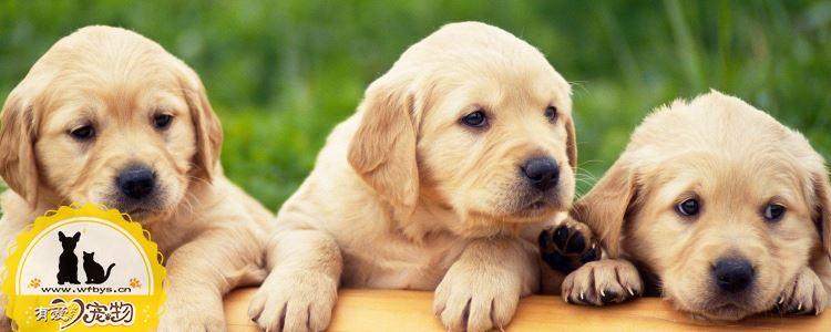 狗狗便血吃什么药 狗狗便血还在乱吃药吗