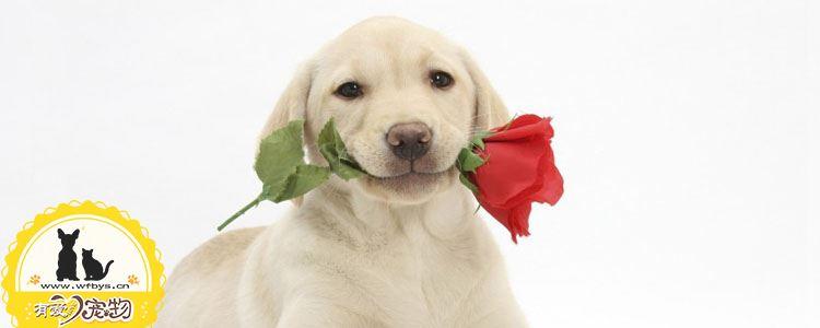 狗狗追尾巴怎么回事 狗狗追自己的尾巴不仅是好玩