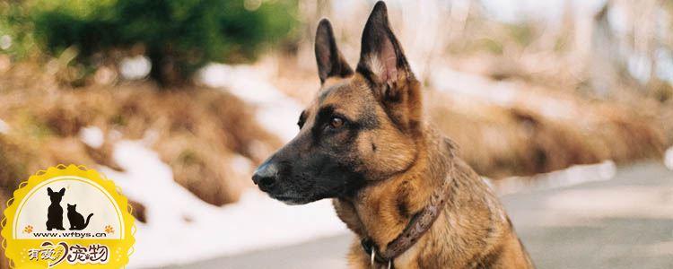 狗狗便秘的症状 出现这些症状说明狗狗便秘了