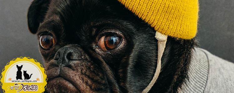 狗传染病都有哪些 让人闻风丧胆的传染病(莱姆病)