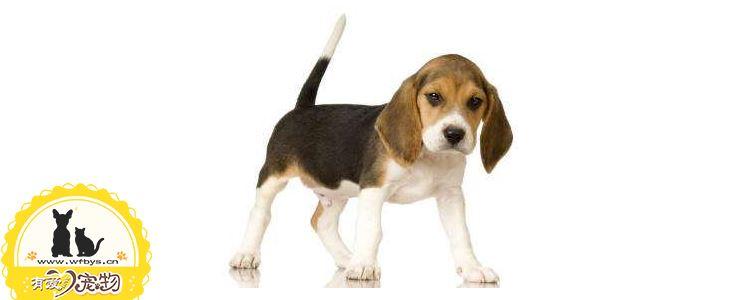 狗疫苗失败的3种原因 你应该更关心狗狗