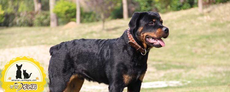 狗狗便秘怎么办 狗狗便秘会有什么症状