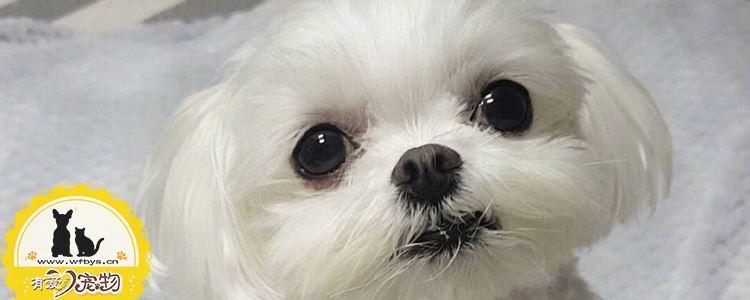 狗狗嘴巴发红是怎么回事 狗嘴巴周边变红正常吗