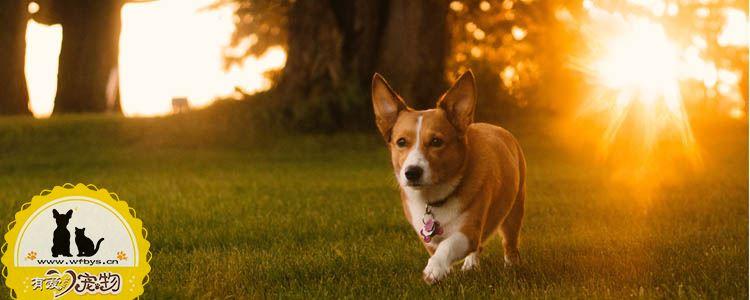 犬维生素A缺乏症的病因 维生素A缺乏可以食补