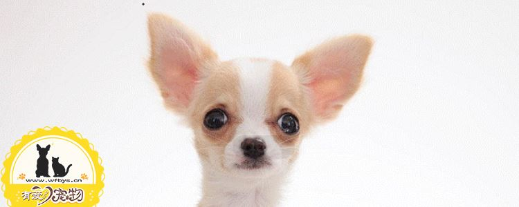 犬瘟热症状 犬瘟热会使狗狗失去生命你知道吗?