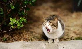 猫咪直肠脱怎么治疗 猫咪直肠脱治疗方法
