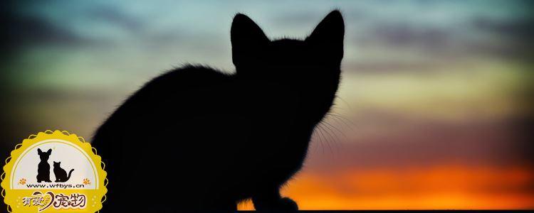猫发情的特征 不知道的还以为它多爱你