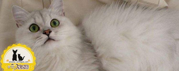如何改善猫积食 猫咪出现积食主人知道为什么吗?