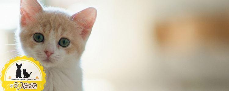 猫耳螨症状 猫耳螨症状图片