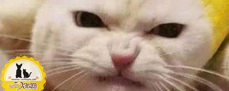 猫湿疹的症状 该如何治疗