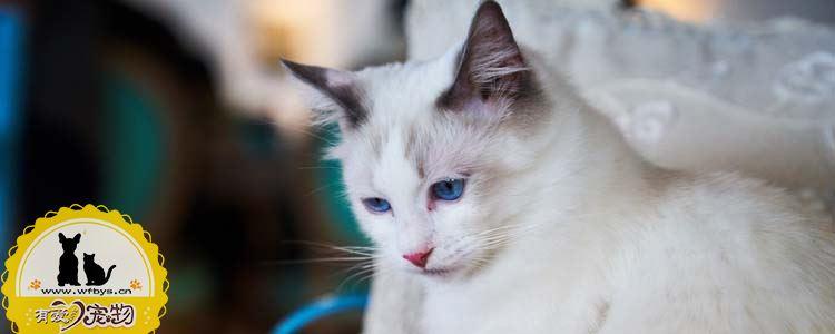 猫呕吐是什么原因 最常见的十种原因你一定要知道