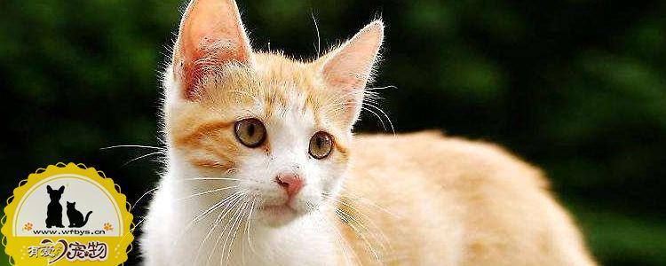 猫厌食呕吐怎么办 猫厌食呕吐不得忽视!