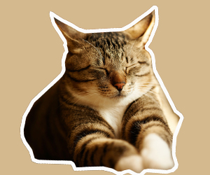 猫眼睛发炎怎么办