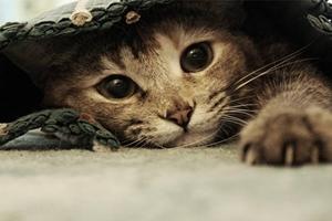 如何识别猫抓病症状