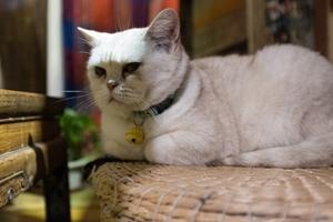 如何给猫咪量体温