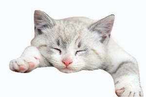 猫流口水是怎么回事