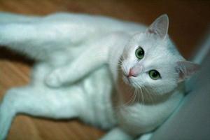 宠物猫怎么喂驱虫药