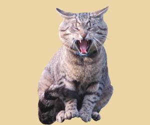 猫狂犬病的早期症状有哪些