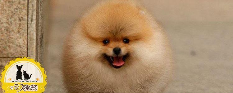 狗狗生病的常见情况 你知道多少
