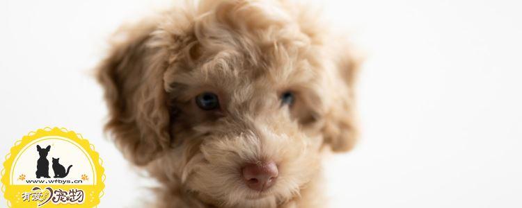 狗狗体内寄生虫怎么去除 你知道常见的体内寄生虫有哪些吗