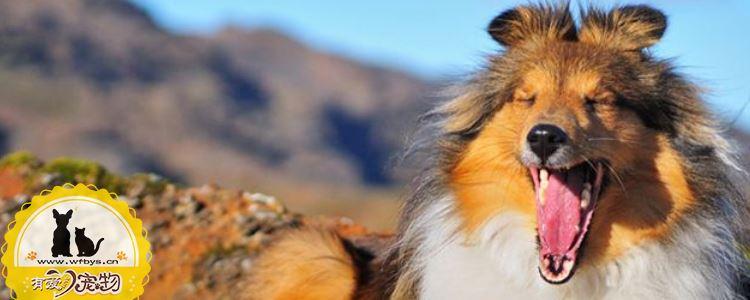 狗狗皮肤病了怎么办 这几种常见皮肤病你要了解