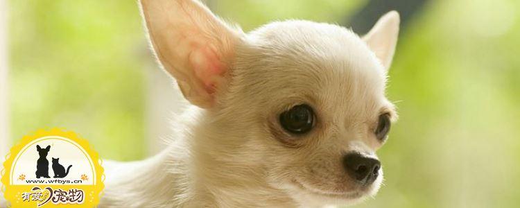 狗绝育的好处 狗绝育不止可以提高狗狗生活质量还有主人!