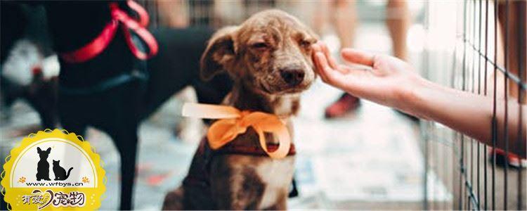 如何给狗狗喂食羊奶粉 正确喂食奶粉的方法你知道吗