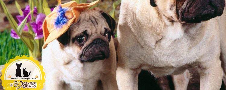 狗咳嗽是什么原因 该吃什么药好得快